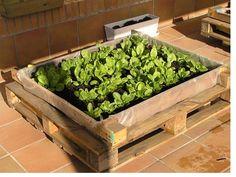 tutorial > PLANTAR UN HUERTO URBANO Garden Projects, Projects To Try, Plantar, Garden Beds, Vegetable Garden, Ideas Para, Exterior, Vegetables, Nature