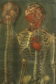 from Anatomy of the Visceras Dissected, by Jacques Fabien Gautier D'Agoty