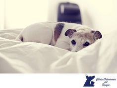 LA MEJOR VETERINARIA DE MÉXICO. Las mascotas, principalmente gatos y perros, cuentan con una capa protectora de grasa y otra de pelo para resguardarse del frío. Sin embargo, es importante que les proporciones un lugar seco y caliente para dormir y cubrirse del frío de la noche. Si tu mascota es de pelaje escaso, probablemente requiera de alguna prenda para mantenerse caliente. En Veterinaria del Bosque tenemos atención especializada para las enfermedades que pueda contraer en esta época…
