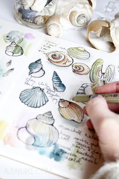 Drawing Doodles Sketchbooks seashells, but would like to do similar little images of. different fish species or something, with bits of info scrawled in the spaces Arte Sketchbook, Guache, Sketchbook Inspiration, Sketchbook Ideas, Small Sketchbook, Sketchbook Project, Nature Journal, Gcse Art, Art Tutorials
