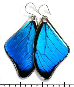 $44 Real Blue Morpho Butterfly Morpho menelaus by PetalConnection