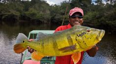Fishing guide with a large peacock bass
