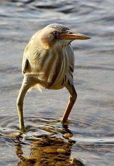 This a rare Cowboy bird.