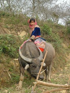 """""""Vietnam . Bac Ha Flower Hmong Buffalo Girl (2004)    The young girl lives close to the North Vietnamese village of Bac Ha she is from the Flower Hmnong minority group and she is riding a water buffalo."""" A bull at that!! IN YOUR FACE SILVANO ALVES?! just kidding = P http://www.flickr.com/photos/pjwar/1139728508/"""