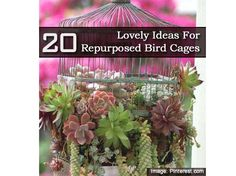 20 Lovely Ideas For Repurposed Bird Cages