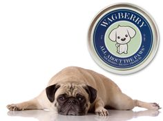 Wagberry Paw Balm for cracked pet paws on sale today w/ free shipping @ www.Coupaw.com