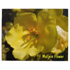 Macro Yellow Mullein Flower Puzzle. Also on other products. http://www.zazzle.com/macro_yellow_mullein_flower-116401482302828111?rf=238426092320559705