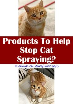 7 Stunning ideas: How To Get Rid Of Stray Cats Spraying smarty cat training spray.Will Clorax Spray Help Cat Sneezing Spread when does a tom cat start spraying.My Male Cat Started Spraying On Me.