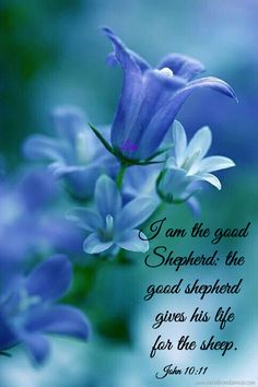 I am the good shepherd: the good shepherd give his life for the sheep. John 10:11