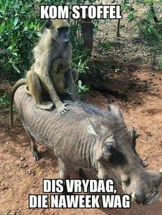 Things that make you go AWW! Like puppies, bunnies, babies, and so on. A place for really cute pictures and videos! Animals Images, Animal Pictures, Cute Pictures, Cute Animals, Sleeping Animals, Afrikaans Quotes, Post Animal, Vintage Metal Signs, Good Morning Good Night