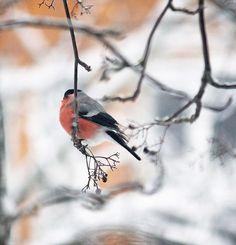 СкрапТеремок: Яркая открытка и пару слов про зимние радости
