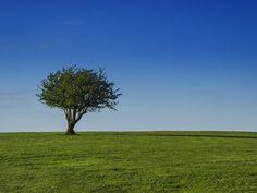 Beauty Lonesome Tree & Field HD Desktop Wallpaper