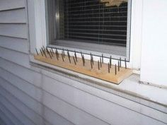 """-   Simple """"Do it Yourself"""" Window Defense ... Against bears of course"""