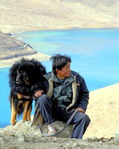 Tibetan man & his Mastiff!
