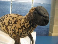 The endangered Hooded Seal, found only in the central and western North Atlantic, could be extinct in our lifetime.