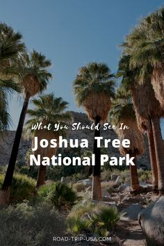 What you must see in Joshua Tree National Park. A guide to the parks highlights and attractions. A driving itinerary is provided so that you can see the very best the park has to offer in 24 hours. National Park Camping, National Parks Usa, Joshua Tree National Park, Backpacking Canada, Canada Travel, Usa Travel, Family Road Trips, Road Trip Usa, Mother Daughter Trip