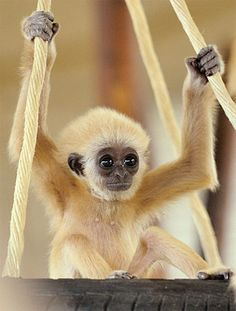 Beautiful pictures of cute baby animals that inspire you, melt your heart and make you smile - See more here >> www.boostinspiration.com/photography/beautiful-pictures-of-cute-baby-animals/