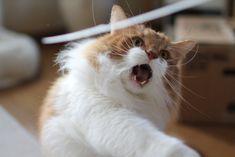 猫 おもしろ - Google 検索