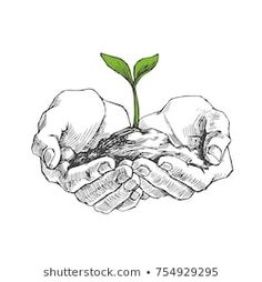Vector illustration of young plant with ground in hands. Palms holding a sprout in sketch style isolated on white Hand Holding Tattoo, Hand Tattoo, Nature Drawing, Plant Drawing, Hand Drawing Reference, Art Reference, Let's Make Art, Hand Sketch, Sky Art