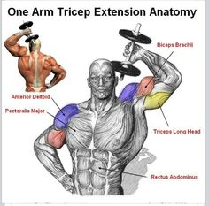 Helps the muscle that jiggles when you wave hello.