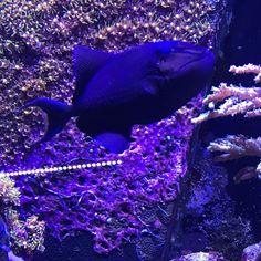 YHWH. Deus Pai e Mãe. A Onipresença de Deus em toda a Criação. Vida. Life. #belezadavida #beautyoflife #beleza #beauty #espiritualidade #spirituality #fraternidadebranca #whitebrotherhood #natureza #nature #cor #color #buda #budha #buddha #energia #energy #aquario #aquarium #peixe #fish ##sabedoria #wisdom #amor #love #harmonia #harmony #deuses #gods http://quotags.net/ipost/1642283821024388934/?code=BbKkG8ch6dG