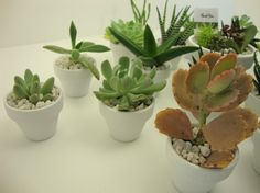 """Collection of 100 Succulent Assorted Plants in 2"""" PAINTED Clay Pots - Wedding, Guest Favors, Terrarium, Centerpieces, Gardens. $300.00, via Etsy."""