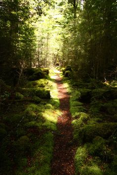 Pretty trail, but I prefer bein' off any human trails ... I'd rather follow a deer trail ...