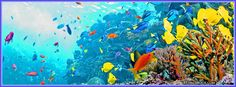 Undersea Picture Of Colorful Sealife With Some Coral