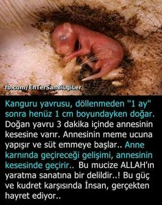 Çok ilginç.. Islamic Quotes, Karma, Did You Know, Allah, Psychology, Spirituality, Knowledge, Facts, Good Things