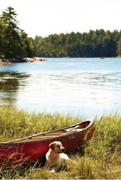 If I were to have a dog, it would be this dog. And this would be my boat. On my lake. In the front yard of my log cabin.