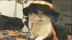 Animated Animal Haiku - Halloween Pirates, Edition!