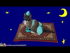 Cat Dresses As Princess Jasmine, Rides Magic Carpet-Roomba For Your Entertainment
