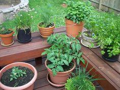potted+herbs+june.jpg (887×666)