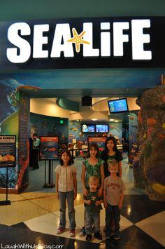 Visit Sea Life Aquarium in Grapevine, TX  for a fun and educational family adventure!  #ad