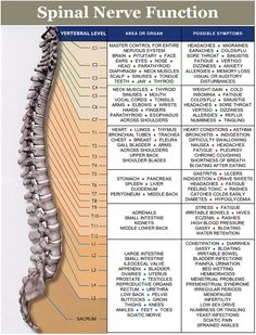 Benefits of Chiropractic - Barnhart Chiropractic - Arnold, MO - Crystal City, MO - Jefferson County Benefits Of Chiropractic Care, Chiropractic Wellness, Health And Beauty, Health And Wellness, Health Tips, Health Benefits, Douleur Nerf, Pomegranate Benefits, Spinal Nerve