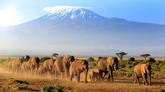 Livet er for kort til å ikke dra på safari!