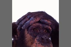 Endangered Wildlife - James Balog Photography