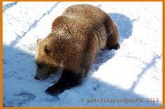 Portfolio Multimedeia: Hymyile olet eläintarhassa! Karhun hymy: Kevät on tullut!