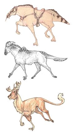 Quadruped Creature doodles