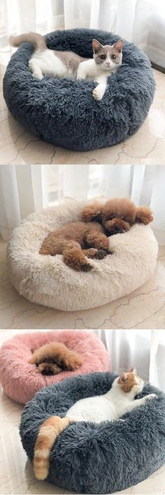 Long Plush Super Soft Dog Bed - katzen - Five Cat Cute Baby Animals, Animals And Pets, Funny Animals, Cute Puppies, Cute Dogs, Dogs And Puppies, Cute Cats And Kittens, Dog Bed, Animals Beautiful