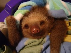 Sleeping sloth fluffy. | 31 Best Kinds Of Fluffy
