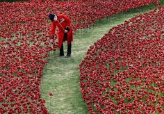 """Há 100 anos atrás, a Grã-Bretanha se envolvia na Primeira Guerra Mundiale a data não poderia passar batida na terra da Rainha. Como toda batalha traz alguns prejuízos, o caso não poderia ser diferente, dando origem a milhares de perdas de militares britânicos. Parahomenageá-los e relembrar este momento marcante, estão sendo """"plantadas""""888.246 flores vermelhas de cerâmica (uma por cada soldado morto, da Grã-Bretanha ou colônias)ao redor da poderosa Torre de Londres. A instalação…"""