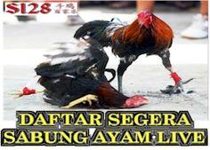 informasi sabung ayam