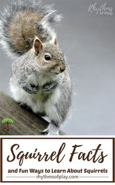 Invite children to learn all about squirrels with this list of squirrel facts, fun squirrel-themed learning ideas and, cute squirrel crafts for kids! Outside Activities For Kids, Creative Activities For Kids, Educational Activities For Kids, Nature Activities, Summer Activities For Kids, Easy Crafts For Kids, Creative Kids, All Nature, Science And Nature
