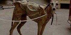 Why greyhounds make terrible alien monsters: they're just too damn cute.