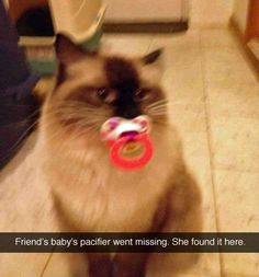 Funny Animal Pictures - View our collection of cute and funny pet videos and pics. New funny animal pictures and videos submitted daily. Cute Funny Animals, Funny Animal Pictures, Funny Cute, Cute Cats, Funny Pics, Funny Kitties, Hilarious, Videos Funny, Crazy Cat Lady