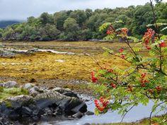 En visite au Loch Sunart, découvrez la péninsule sauvage d'Ardnamurchan !   #ecosse #scotland #ardnamurchan #alainntours   © Loic Trolay Inverness, Highlands, Chutes Victoria, Loic, Nature Sauvage, Destinations, Parc National, Mountains, Travel
