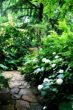Lush Green Hydrangea Garden | Flickr - Photo Sharing!