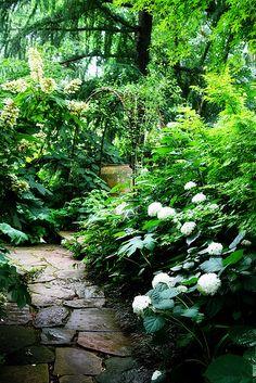 Lush Green Hydrangea Garden   Flickr - Photo Sharing!