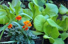 Make sure you are getting the most out of your backyard vegetable garden by following these helpful summer tips.